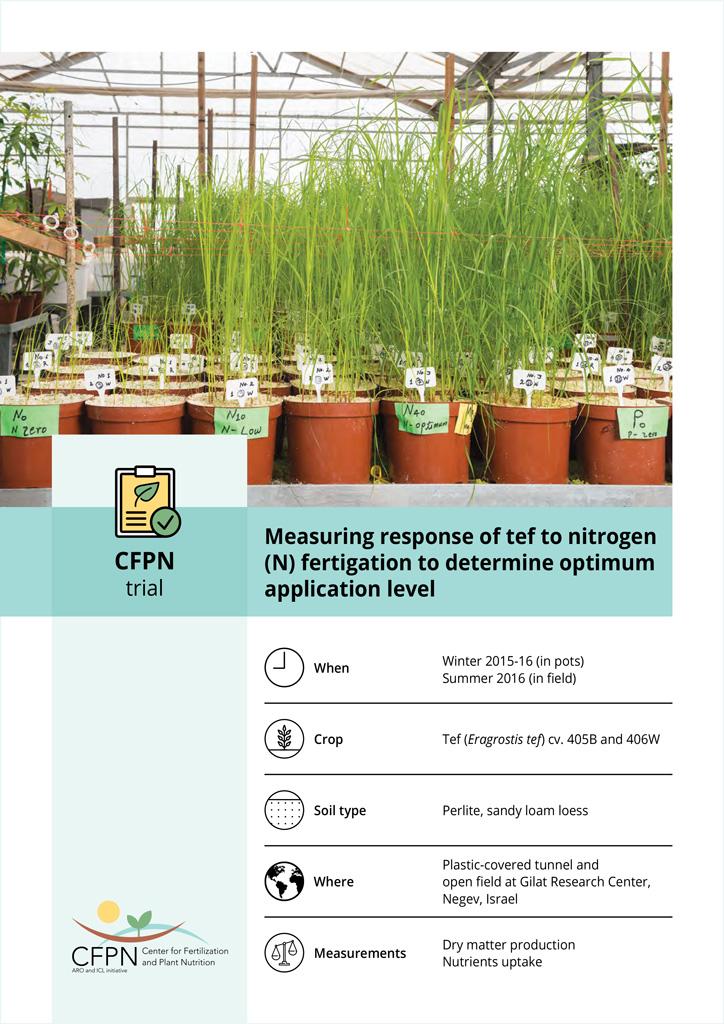 Measuring response of tef to nitrogen (N) fertigation to determine optimum application level